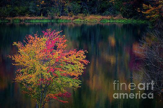 Autumn Splendor by Doug Sturgess