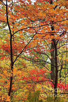 Autumn Splendor Fall Colors Leaves and Trees by Dan Carmichael
