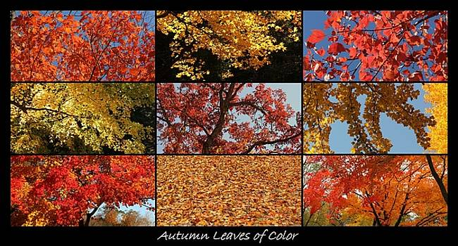 Rosanne Jordan - Autumn Splendor of Leaves