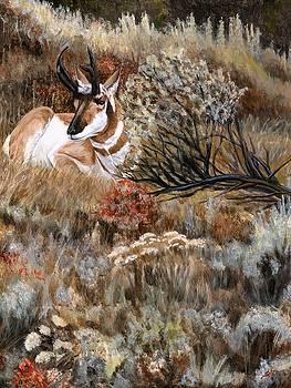 Autumn Splendor by Sheri Gordon