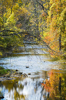 Autumn Stream Reflections by Brian Wallace