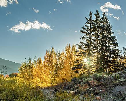 Autumn Sunburst by Lois Lake