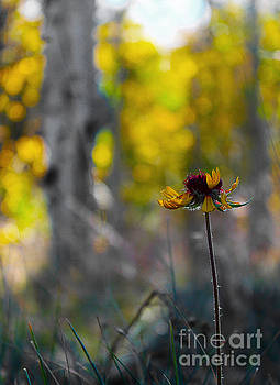 Autumn Sunflower by Wesley Hahn