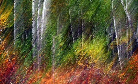 Autumn Tango by Bill Morgenstern
