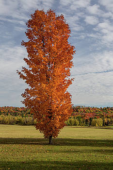 Autumn Tree by Brent L Ander