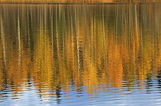 Autumn tree reflections by Elvira Butler