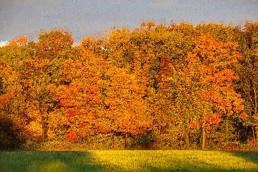 Autumn Trees by David Letts