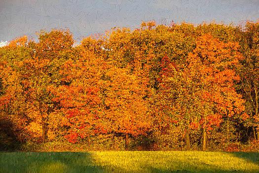 David Letts - Autumn Trees