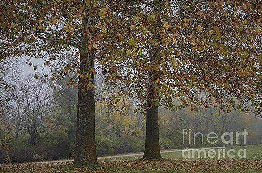 Autumn Trees with Fog by Tamara Becker