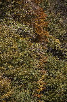 Autumn Vertical by Zeljko Dozet