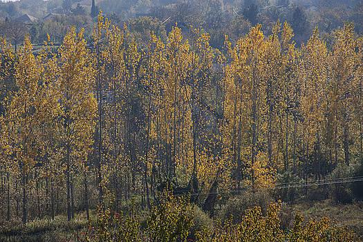 Autumn Verticals by Zeljko Dozet