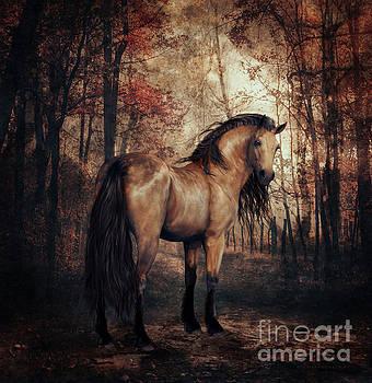 Autumn Walk by Shanina Conway