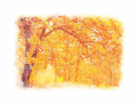 Autumn Walk by Tears of Colors Gallery