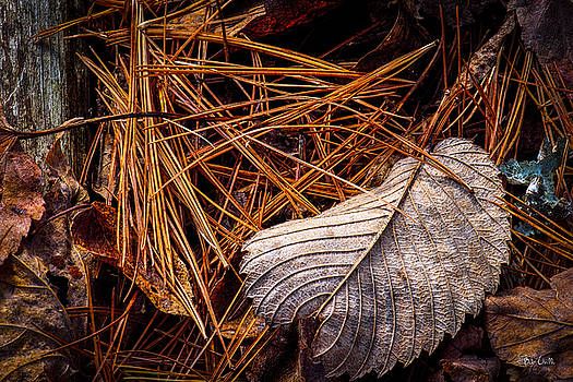 Autumn Whispers by Bob Orsillo