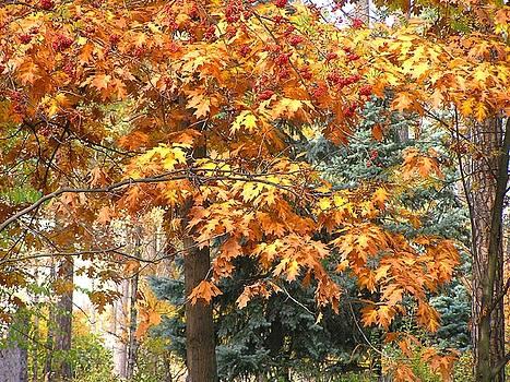 Autumn Wood by Oleg Zavarzin
