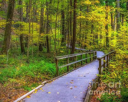 Nick Zelinsky - Autumn Woodland Trail