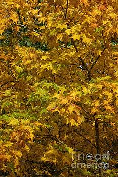 Autumnal Leaves and Trees 2 by Jean Bernard Roussilhe