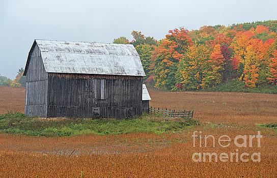 Autumnal.. by Nina Stavlund