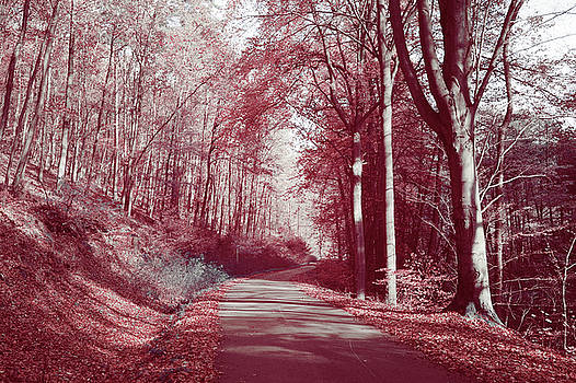 Jenny Rainbow - Autumnal Path