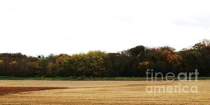 Autumn's Blanket by J L Zarek