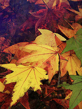 Autumns Colors by Robert Ball