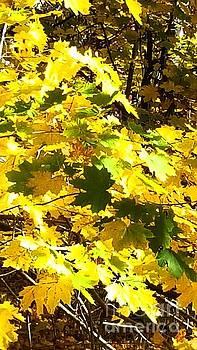 Autumn's glory by Marlene Williams