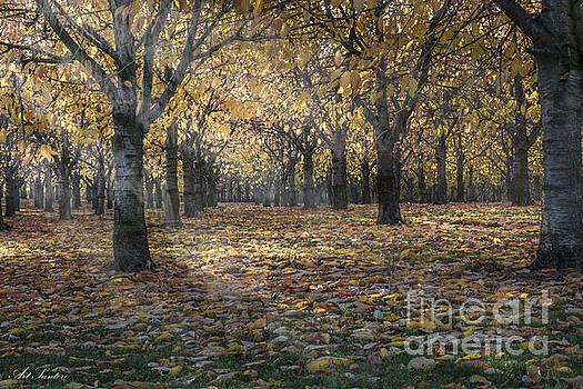 AutumnS Strokes by Bruno Santoro
