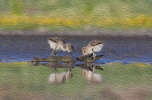 Avocet Babies by Jessica Nguyen