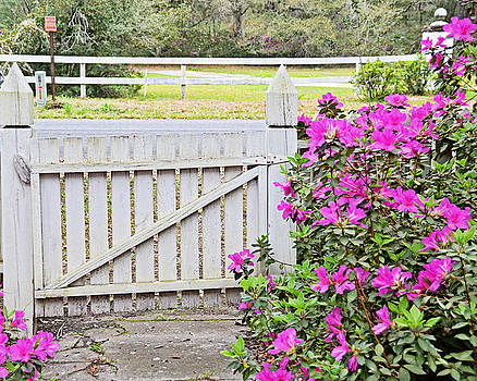 Azalea Gate by Linda Brown