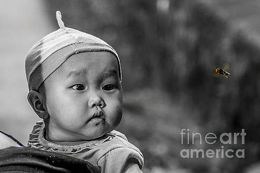 Baby and the Bee by Diana Chason