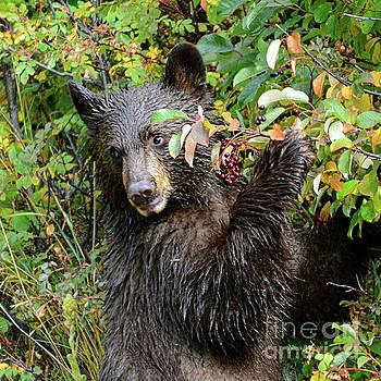 Breakfast for Black Bear Cub by Nava Thompson