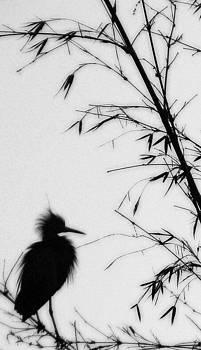 Linda Knorr Shafer - Baby Egret Waits
