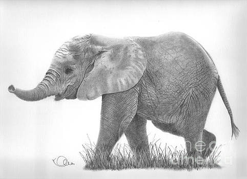 Baby Elephant by Karen  Townsend