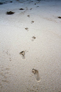Baby Footprints In The Sand by Dustin K Ryan