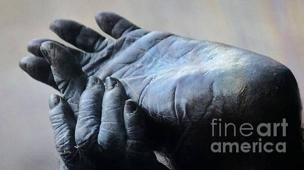 Paulette Thomas - Baby Gorilla Feet and Hands