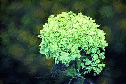 Baby Lime Hydrangea  by Sandi OReilly