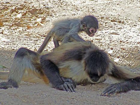 Jeff Brunton - Baby Monkey