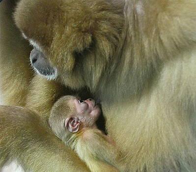 Rick  Monyahan - BABY MONKEY