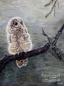 Baby Owl by Judy Kirouac