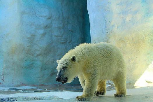 Baby Polar Bear by Michael Rucker