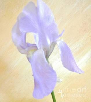 Baby Purple Iris II by Marsha Heiken