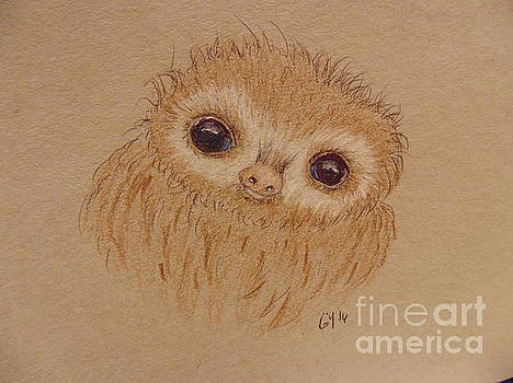 Baby Sloth by Ginny Youngblood