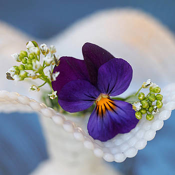 Back Alley Pansy by Prairie Poetry
