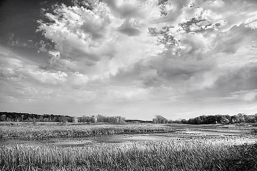 Back To Nature by Kathi Mirto