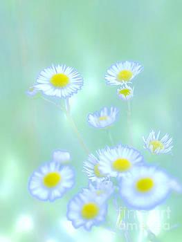 Background Flowers by Tara Lynn
