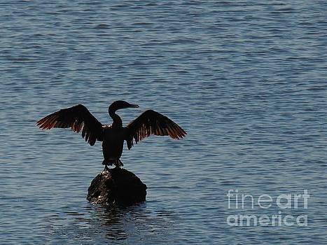 Backlit cormorant by Rrrose Pix