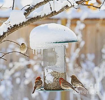 Backyard Birds by Betty Morgan