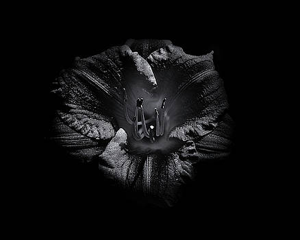 Backyard Flowers In Black And White 26 by Brian Carson