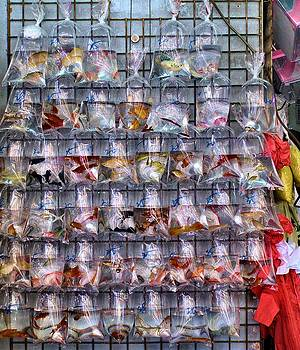 Bags of Tropical fish for sale by Kathy Daxon