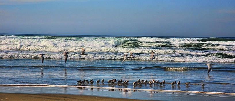 Chuck Kuhn - Baja Coast